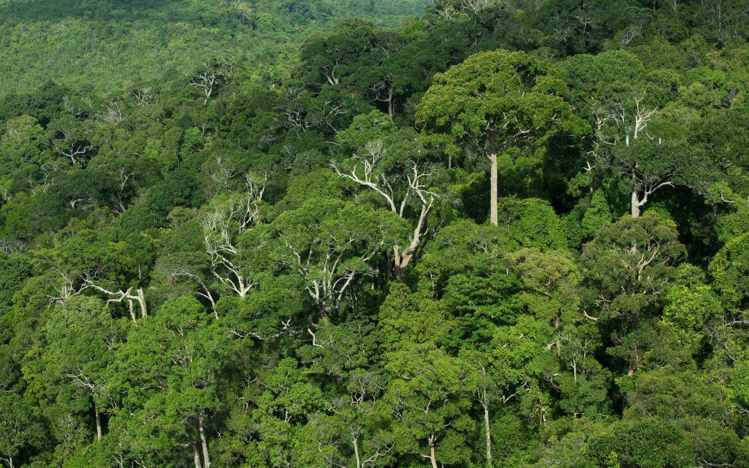De beste technologie tegen klimaatverandering: bomen planten
