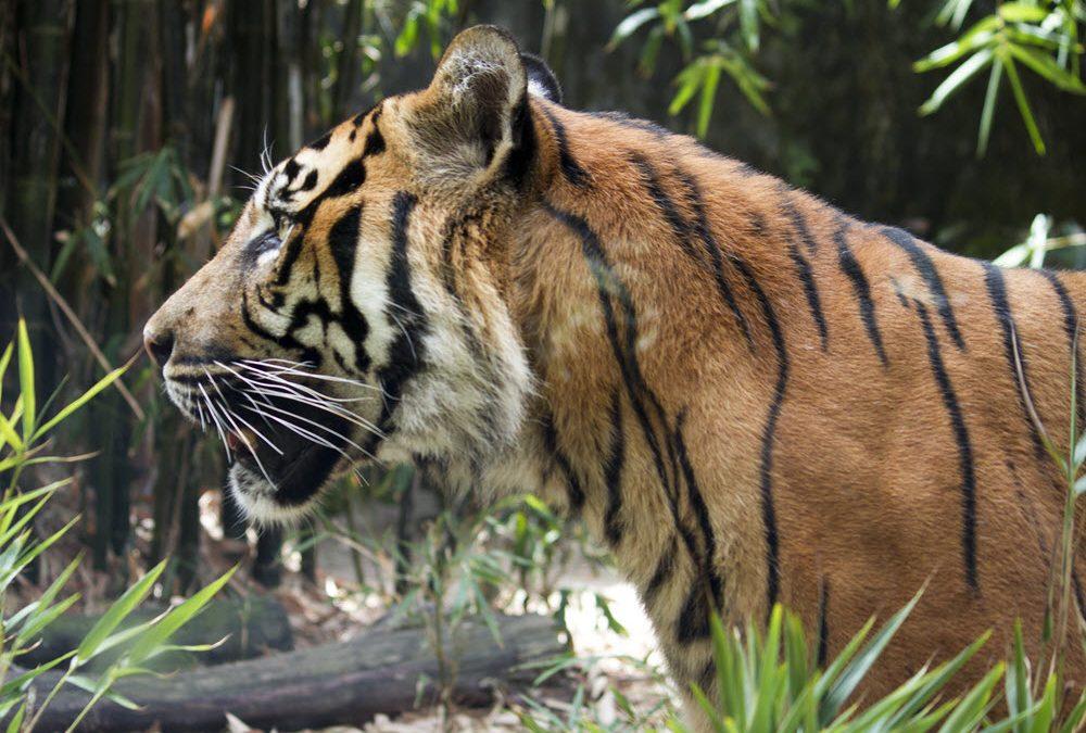 Punt voor natuurbeschermers in de strijd tegen stropers