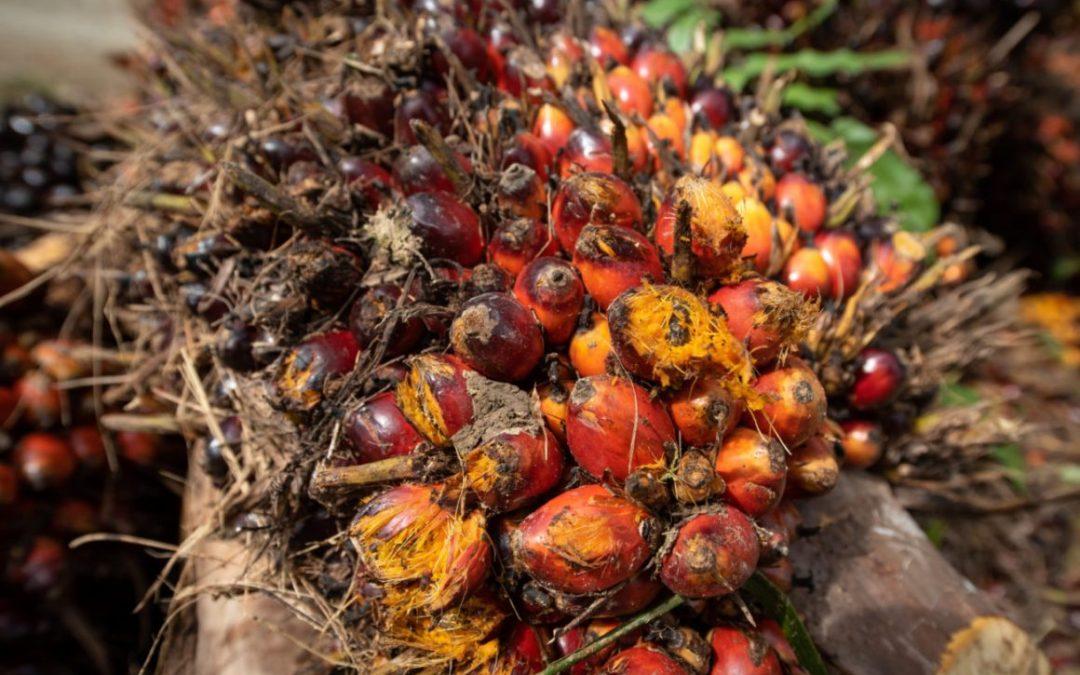 Perspectieven over palmolie