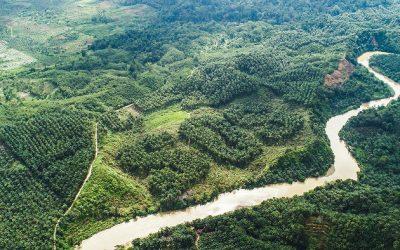Een verbod op ontbossing voor Britse supermarkten?