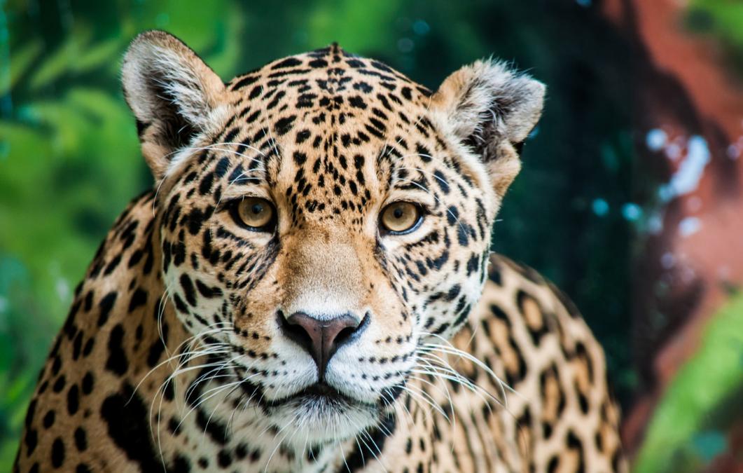 CI luidt noodklok namens Surinaamse wildlife